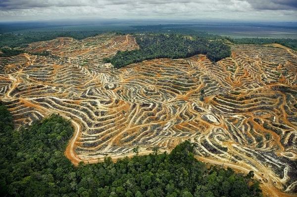 Мирное соглашение в Колумбии - угроза тропическим лесам страны