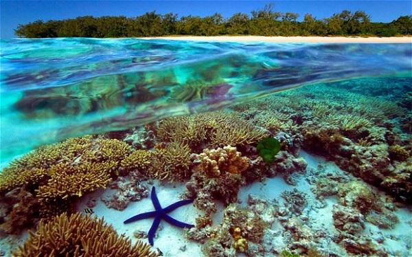 Глобальное потепление меняет Большой Барьерный риф