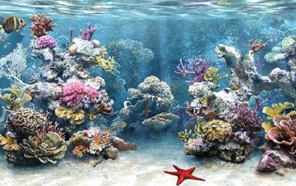 Коралловые рифы экватора более устойчивы к изменениям климата