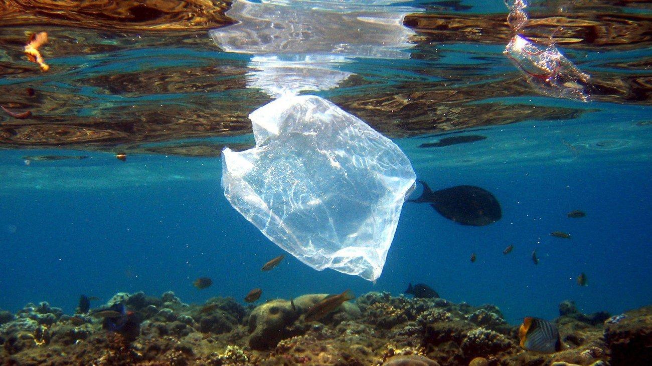 Рыба в океане стала гибнуть из-за пластика в три раза чаще