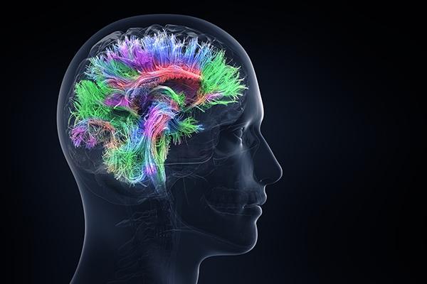Методы для улучшения памяти и работы мозга, проверенные наукой