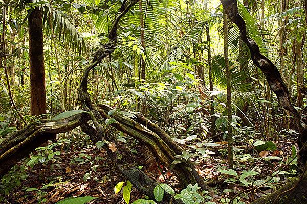 Что можно сделать для спасения тропических лесов