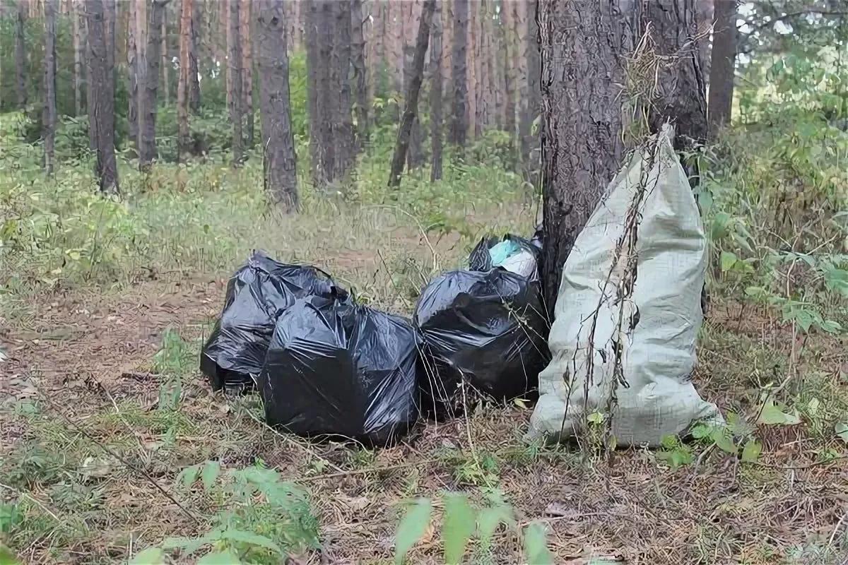 Два жителя Удмуртии убрали в лесу мусор