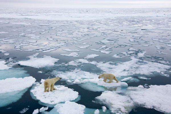 Потепление вызвало резкие и противоположные изменения в связанных морских сообществах