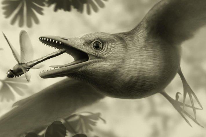У птерозавров были перья?