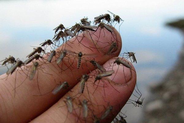 Почему комары кого-то кусают чаще, а кого-то реже?