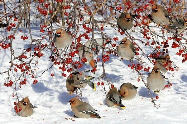 Зачем подкармливать птиц зимой?