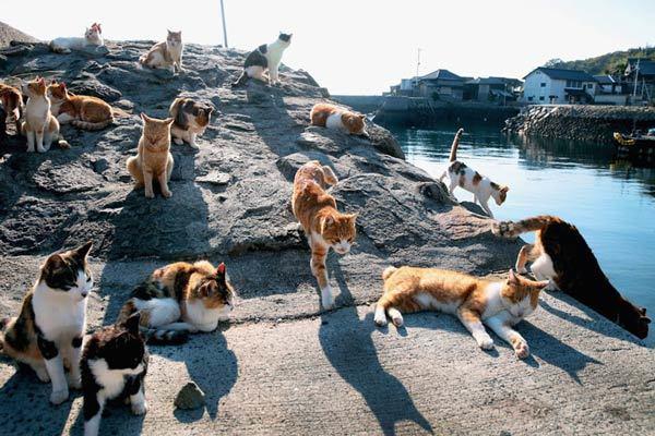 Могут ли животные помочь нам предсказывать землетрясения?