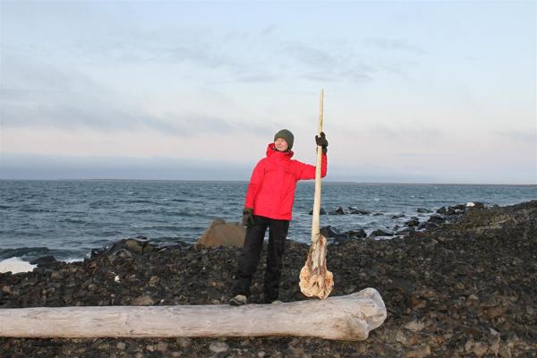 На Земле Франца-Иосифа обнаружили череп арктического единорога