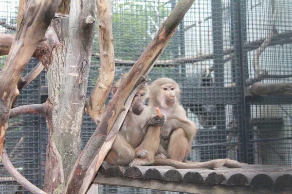 В зоопарке Пензы обитателей переводят в теплое место