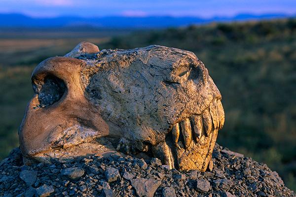 Пермское вымирание случилось почти