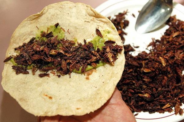 В Литве начнут употреблять в пищу сверчков и других насекомых