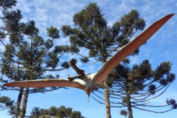 В Австралии обнаружили останки летающего динозавра