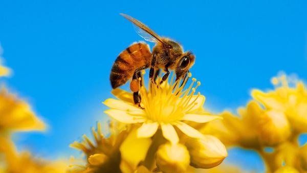 В Тульской области найдены виновные в массовой гибели пчел
