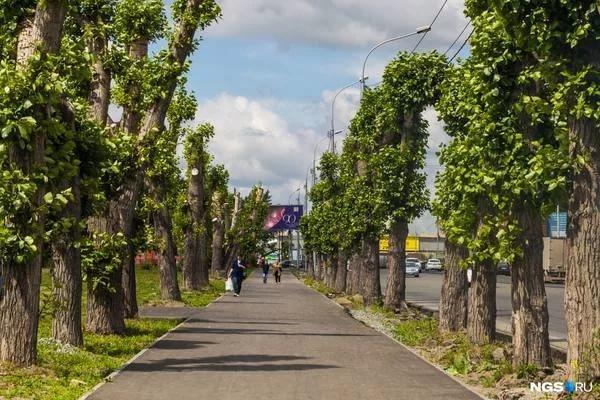 Активисты предложили пересчитать в Новосибирске деревья