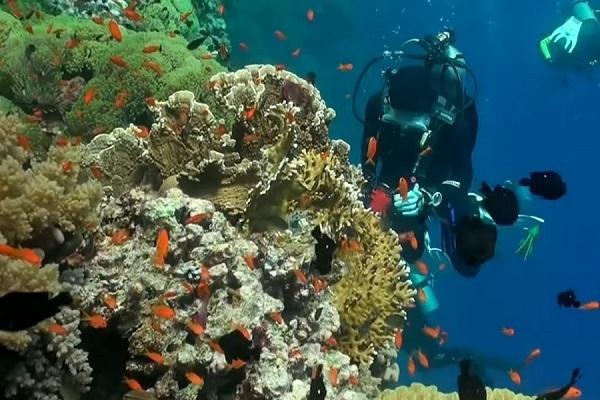 У берегов ОАЭ появится искусственный риф