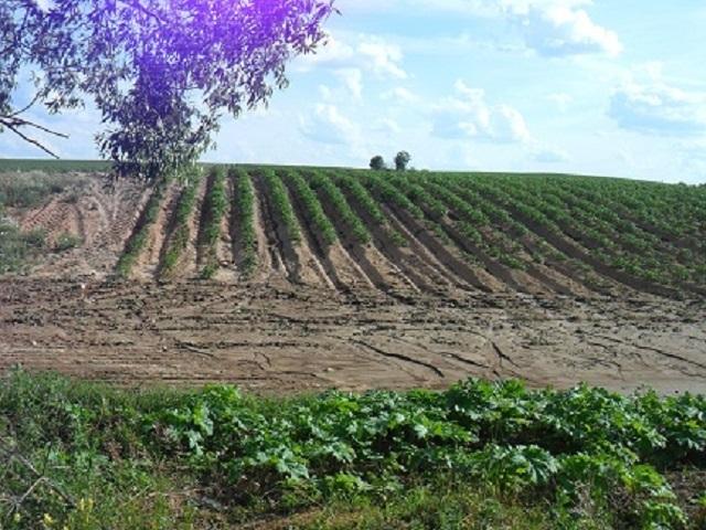 Ученые заявили о вреде органического земледелия для биосферы