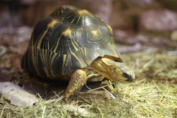 В Нигерии умерла 344-летняя черепаха