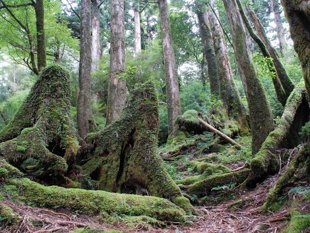 Древние растения: как менялись деревья и травы за миллионы лет?
