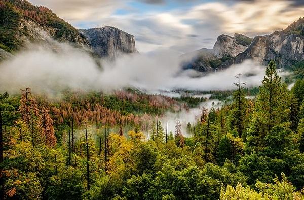 Вода, а не температура, ограничивает глобальный рост лесов