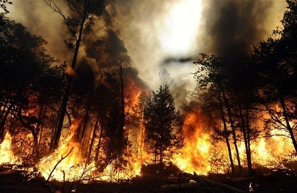 Лесные пожары влияют на урожай на сотни километров