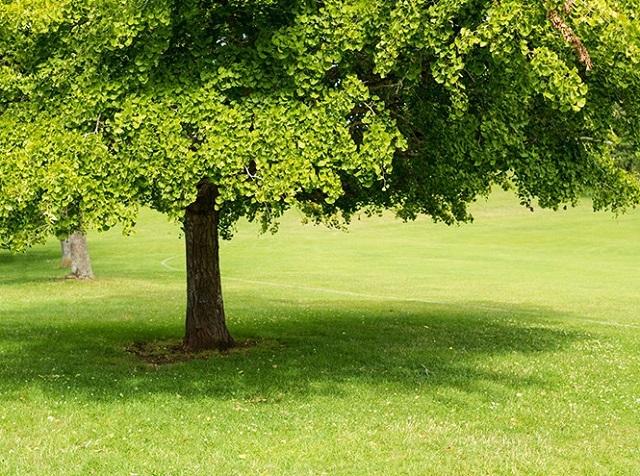 Древние растения: как менялись деревья и травы за миллионы лет?. 2751.jpeg