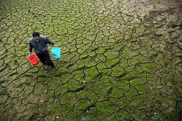 Ученые разрабатывают средство для растений против засухи