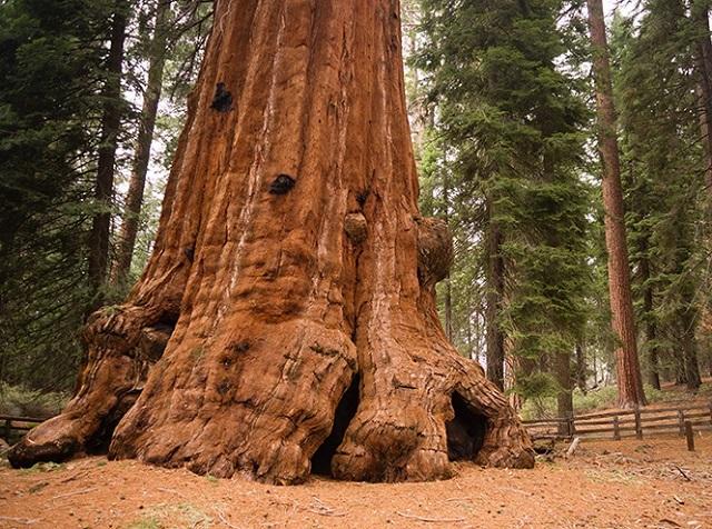 Древние растения: как менялись деревья и травы за миллионы лет?. 2753.jpeg