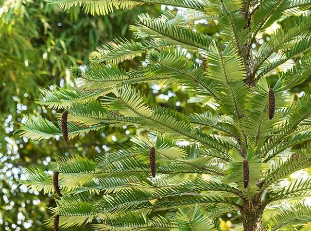 Древние растения: как менялись деревья и травы за миллионы лет?. 2754.jpeg