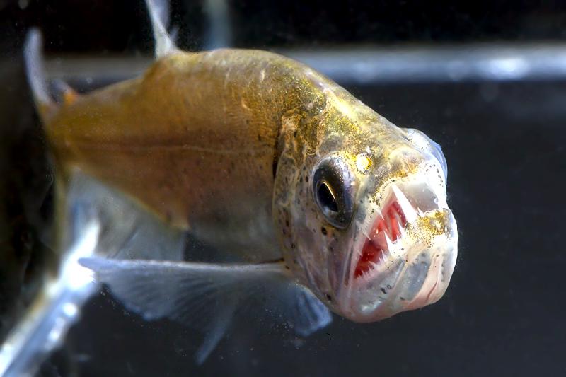 Животные-вампиры, которые не обязательно являются кровососами: крабы, рыбы, моль. 2769.png