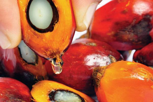 Производство пальмового масла и его влияние на окружающую среду