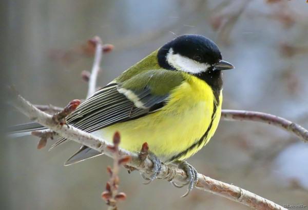 Орнитологи насчитали в Москве более 4 тысяч птиц