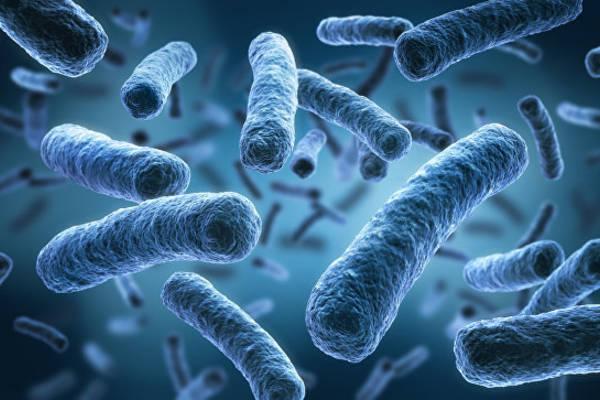 Теперь бактерии можно обнаружить еще быстрее