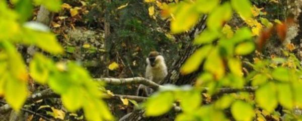 В Большом Каньоне Крыма туристы встретили обезьяну