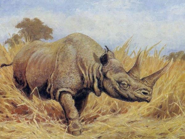 В Приморье обнаружили останки древнего носорога