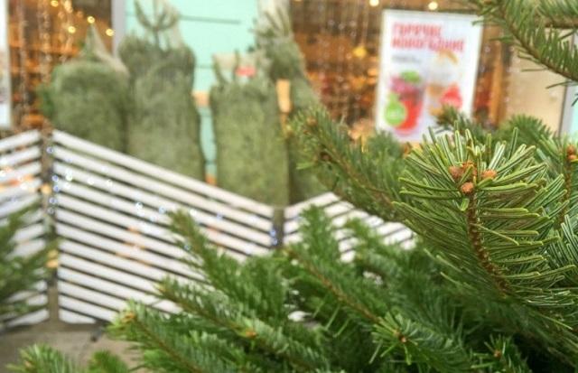 Новогодние елки можно сдать на переработку в 13 парках Москвы