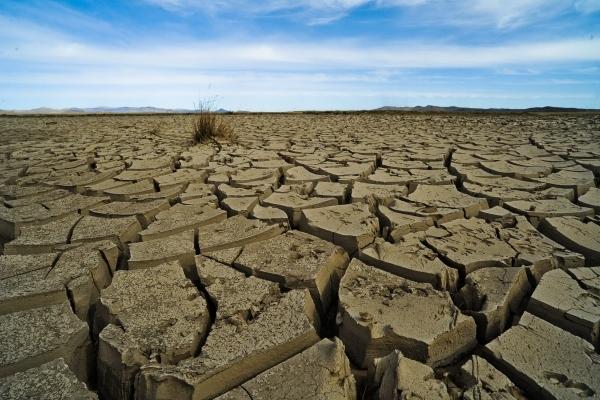 Растения защищают озоновый слой во время засухи