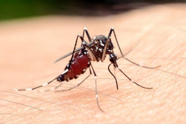 Что если ваша кровь может убить комаров?