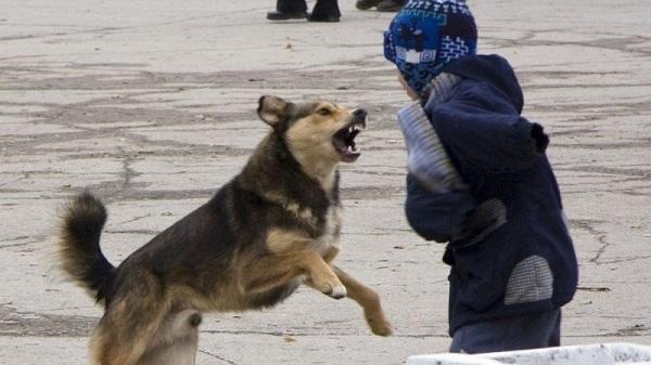 Бродячие собаки нападают на людей