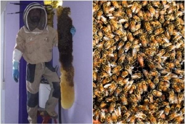 В Испании пара два года жила вместе с роем пчел в спальне