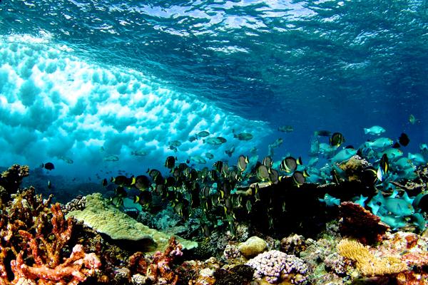 Мировой океан: какие экосистемные услуги он нам предоставляет
