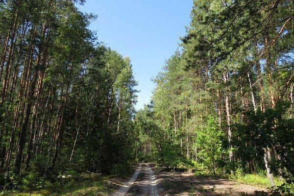 В лесничествах Брянской области наведут порядок на родниках