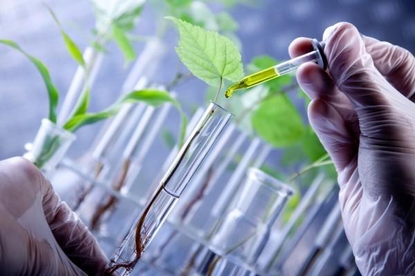 Биологи: растения начинают болеть, если к ним прикасаться