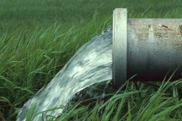 Мох можно использовать для очистки воды - японские ученые