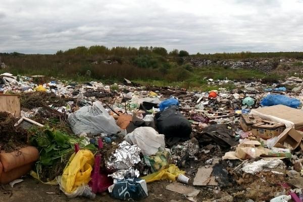 В Севастополе могут повысить штрафы за образование стихийных свалок