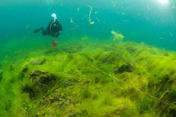 Океанолог рассказал о находках на дне Байкала