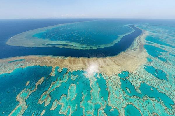 Третья часть Большого Барьерного рифа погибла в 2019 году