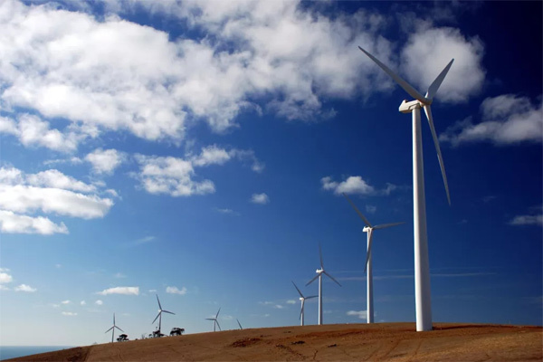 Ветряные турбины безнаказанно убивают животных