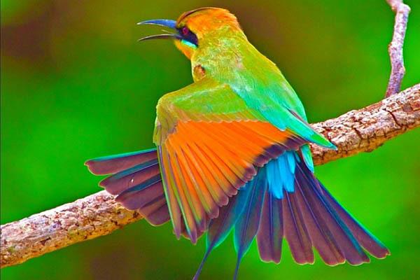 Островным птицам нет нужды пленять самок  ярким оперением - ученые