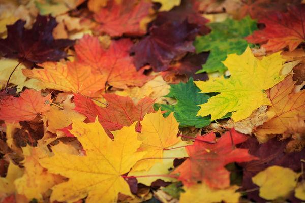 Почему листья меняют цвет